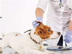 大寵愛 是愛寵驅蟲的藥 時尚伴侶寵物醫院