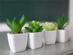成都植物花卉租賃