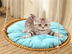 猫用品便宜出速度拿