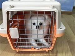 喀什可空運可陸運初見寵物托運公司
