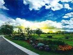 园林绿化施工园林绿化养护绿化苗木销售绿植花卉销售租