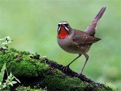岳阳鸵鸟繁殖基地出售各类鸵鸟苗