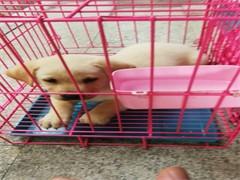 喀什正規安全的寵物托運公司