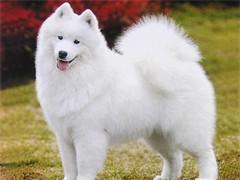 皇家犬舍世界名犬接受 领养