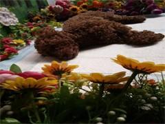 杭州寵物火化 動物無害化24小時服務中心