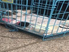黄石正规安全的宠物托运公司