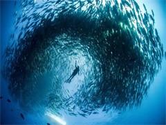 威海潜水潜水培训水下打捞水下拍照摄影