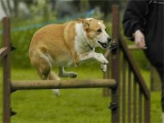 长沙多乐军犬训练基地