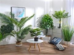绿植零售,批发,租摆,绿化养护,园林绿化