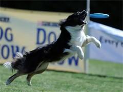 小狗狗寄養、訓練就找勇軍訓犬基地 用心對待
