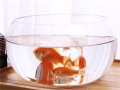 成都海鮮池魚缸定做可移動即買即用