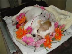 安葬狗狗的地方,成都可以火化狗狗