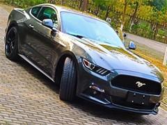 福特 福睿斯 2015款 1.5 自动 舒适型低首付 可按揭 当天提车