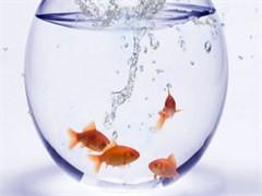 鱼缸定制价格面议