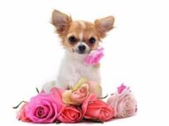 杭州本地出售各類名犬 特價直銷 健康質保 歡迎現場選購