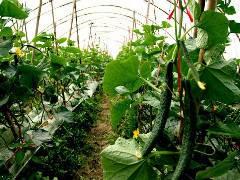 家庭農場土地認養種植