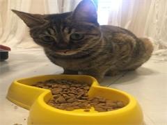 出售猫粮,营养品,用品罐头