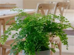 漳州办公室植物盆栽养护公司