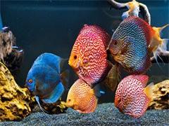 杭州賣觀賞魚