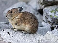 各种大小家兔