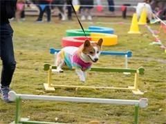 堰好的宠物训练金牌宠物训练学校