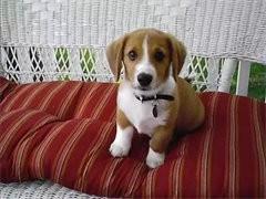 杭州犬舍直銷世界各類名犬 支持上門看狗加有折扣