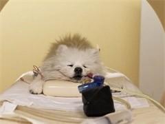蚌埠市动物医院大型综合性动物医院,高级兽医师坐诊