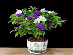 成都綠化養護管理,成都植物花卉租擺