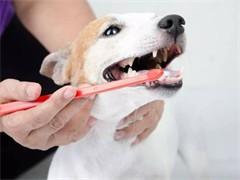 淘气包宠物南航店以专业的技术为您服务