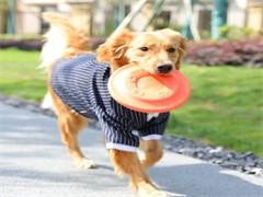 杭州拱墅狗狗訓練 寄養訓練狗狗大小便 訓犬師上門服務