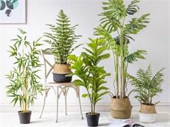 漳州公司绿植养护公司