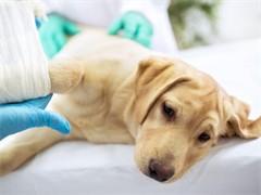 专业动物医疗、各种手术、售卖宠物用品