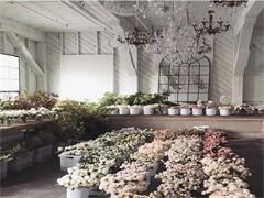 母亲节以及52花束