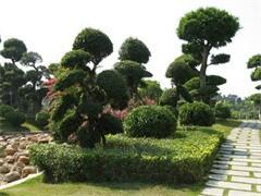 微光绿植园艺