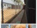 爱宠之家宠物寄养中心,可上门接送。