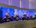 常州大型亚克力鱼缸定做办公室屏风家庭玄关高清水族工程