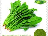 优质菠菜粉 菠菜速溶粉
