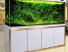 专业鱼病医治 专业鱼缸洗濯 专业鱼缸造景设计 鱼缸维修