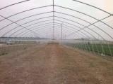 保定养殖大棚生产厂家