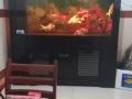 1.8米鱼缸搬家出售