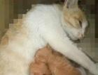 刚满月小猫咪 价钱不重要 找个对猫咪好 真心爱猫的买家