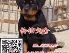 佛山罗威纳犬价格 佛山在哪里有卖纯种罗威纳犬 包健康签协议