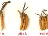 冬虫夏草的价格一根或者一克的多少钱合适