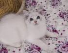 布偶猫(各种品种都有)