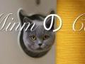 Minm喵生活宠物家庭寄养兼配种包怀。