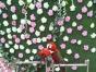大型百鸟展鹦鹉表演骆驼展羊驼孔雀矮马香猪火鸡驼鸟大马