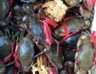缅甸黑蟹一手货源