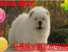 劲爆中松狮幼犬多窝出售公母均有 签保障协议