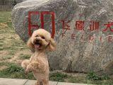寵物犬訓練,讓您的愛犬掌握技術專長 糾正壞毛病