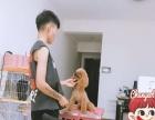 宠物美容护理等价格公道